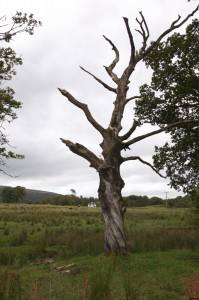 Cool tree along the way